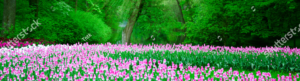 Pink tulips fill a park with trees in background